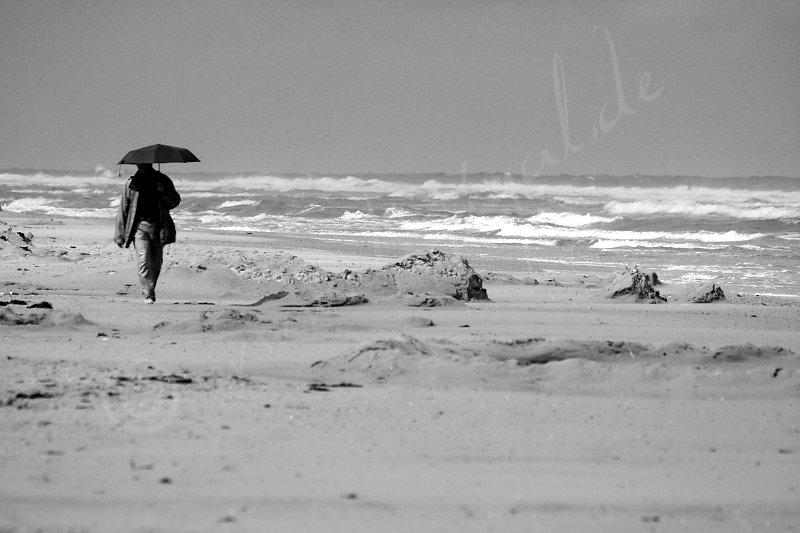 Strandläufer im Blick