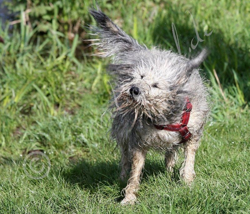 Emmi badet auch gern, aber noch schöner kann sie ihr Fell wieder trocken machen :-)