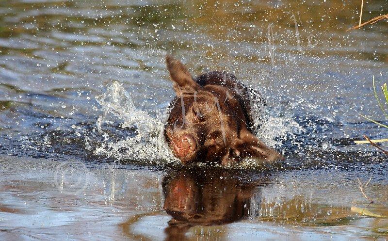 Im Wasser schütteln?