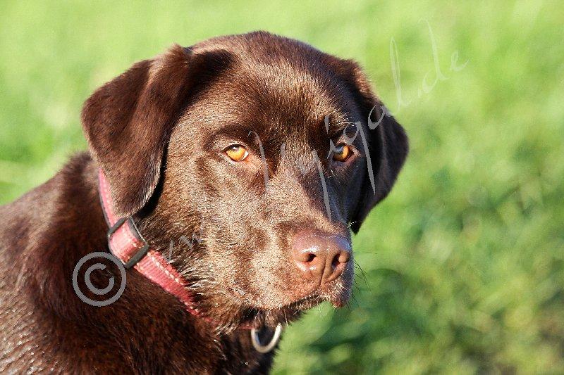 Wenn bernsteinfarbene Hundeaugen dich im Blick haben...