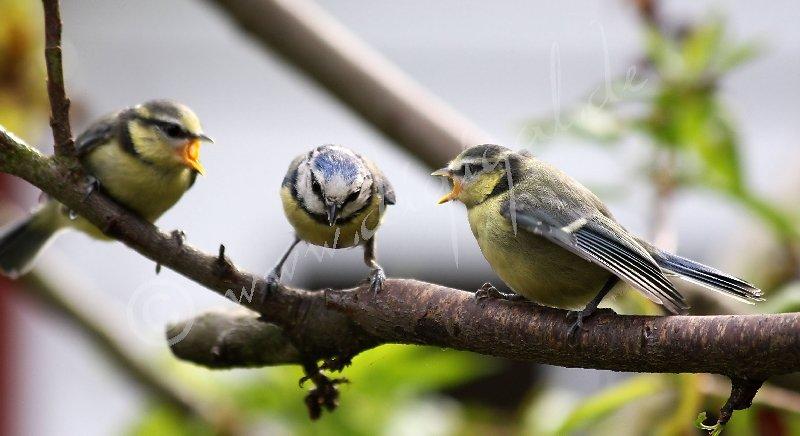 Vogelige Ansichten