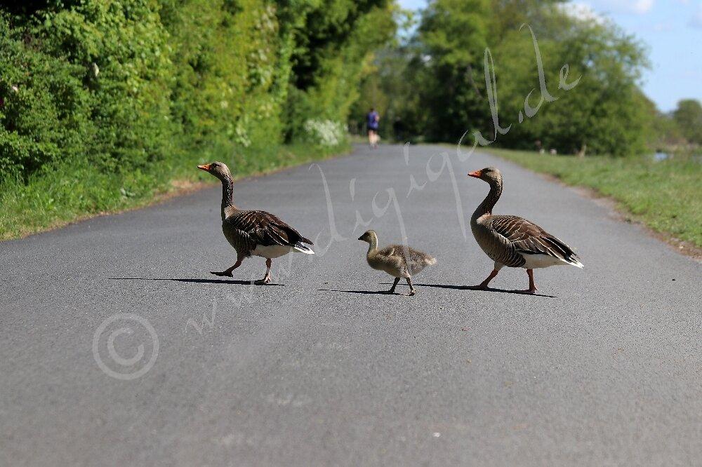 Ordentliche Strassenüberquerung