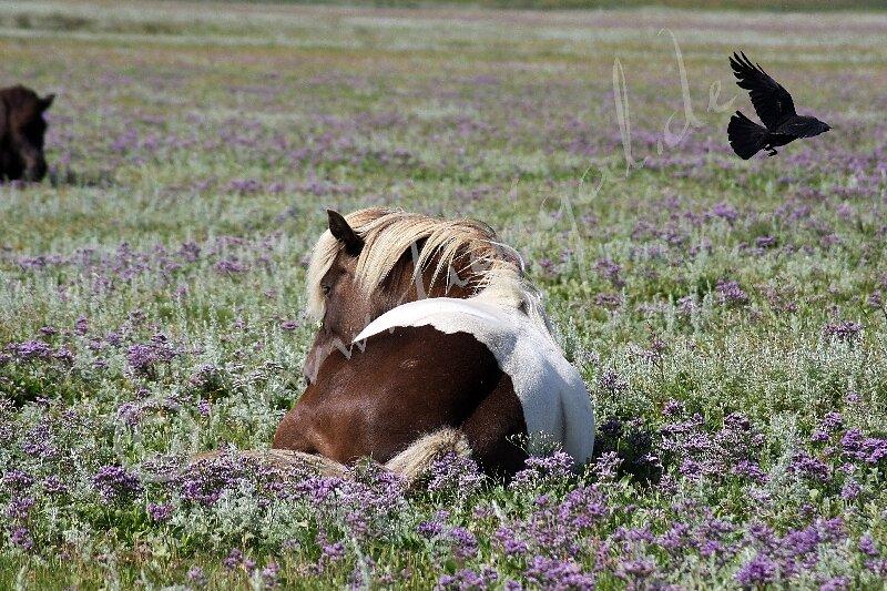 Von Raben und Pferden