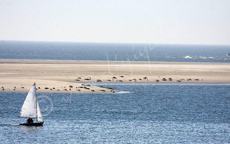 Seehundsbank Hohes Riff