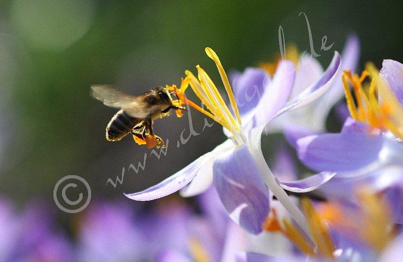 Honigproduzent